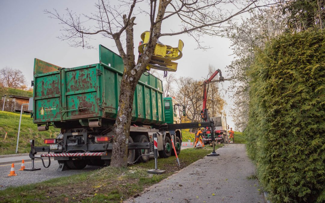 Strassenbäume fällen